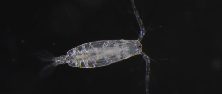 Plankton Information  ...